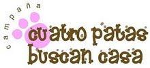 CUATROPATITAS BUSCAN CASA