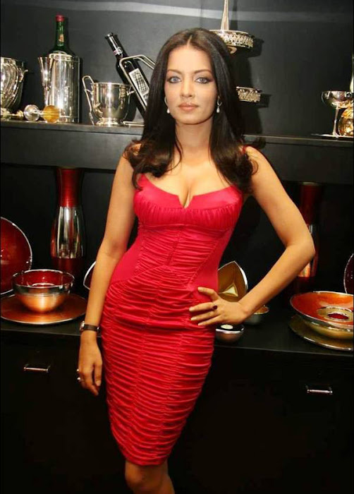 celina jaitley celeina jaitley red dress picture hot images