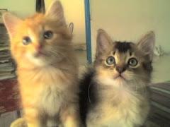 nenG dan saudara kembarnya, mooN. tapi mooN dah.. hu hu hu....