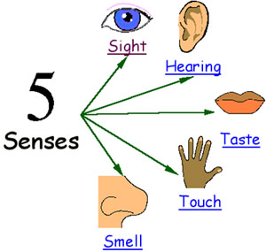 sensory details on sight sound smell taste touch The sensory experience is all about using the available senses to promote your brand use sight, sound, touch, scent & taste to add further impact and appeal to boost the effectiveness of your print piece.