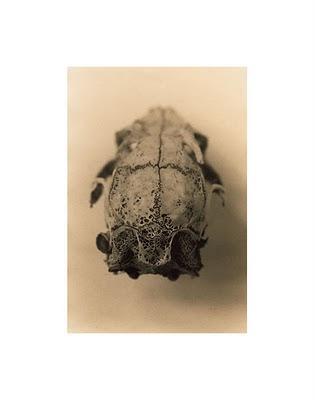 Found Skull 2 ⓒ Cate McRae 2008