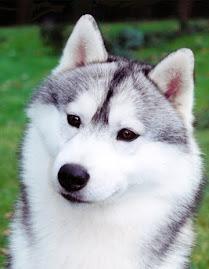 Cão do Mês