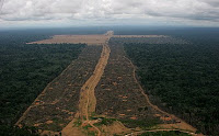Soy plantation in deforested Amazon