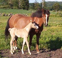 Dolly och mamma Emma