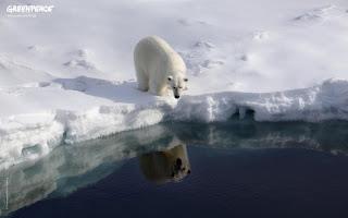Ice Bear Wallpaper