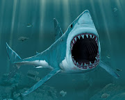 Biggest Ocean Animals Photos & Pictures, Images (ocean animals blood for the sharks)