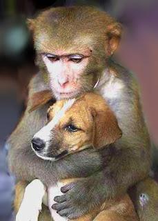 animal-friendship Wallpaper