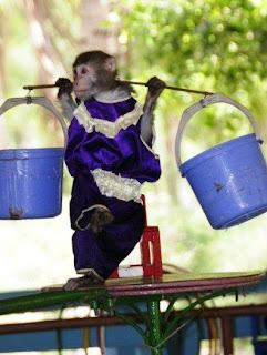 The monkey acrobats