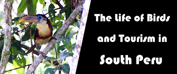 The Life of Birds and Tourism in South Peru