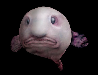 blobfish fundo do mar