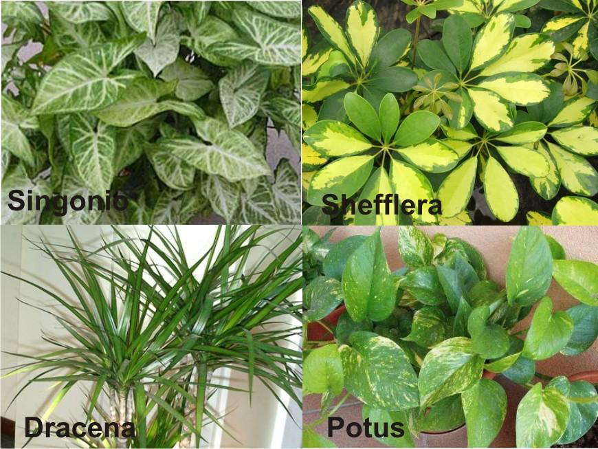 Tipos de plantas de interior dise os arquitect nicos - Plantas de interior ...