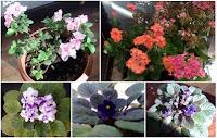 Localização de canteiros de flores