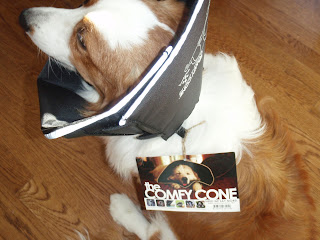 Dog Comfy Cone Uk