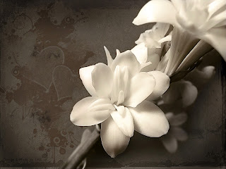 Beautiful White Flower Desktop Wallpaper