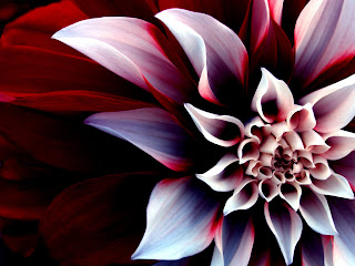 Beautiful Enigmatic Flower iPhone Wallpapers