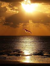 """""""-Cada uno de nosotros es en verdad una idea de la Gran Gaviota, una idea ilimitada de la libertad"""