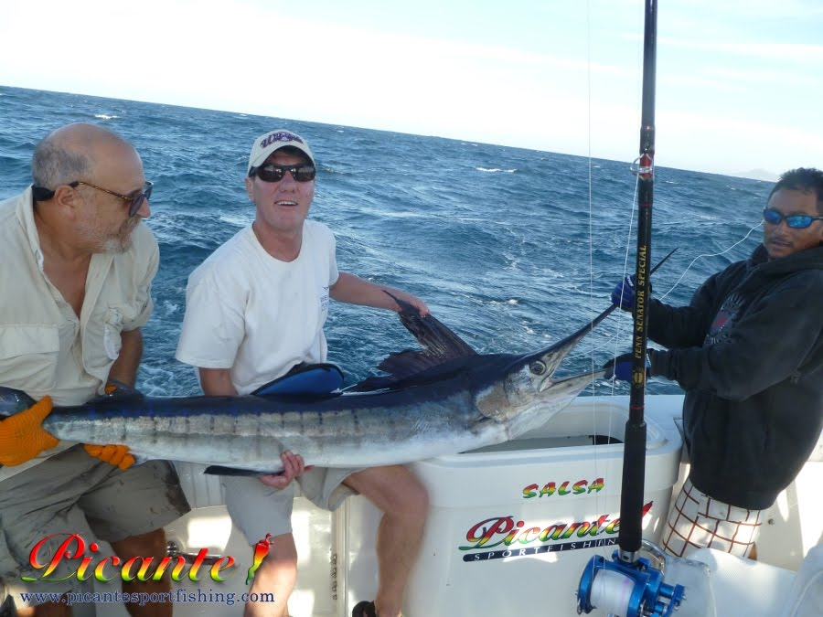 Picante 39 s cabo san lucas fishing reports striped marlin for Cabo san lucas fishing report