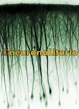 sinapsis web