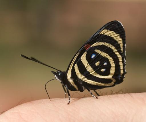 Butterfly. Photo: Horacio Iannella