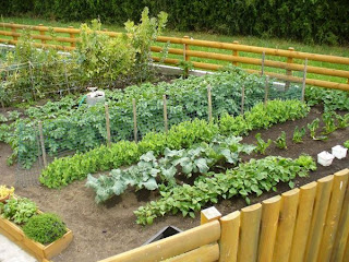 Terrace farming benefits of terrace farming for Use terrace in a sentence