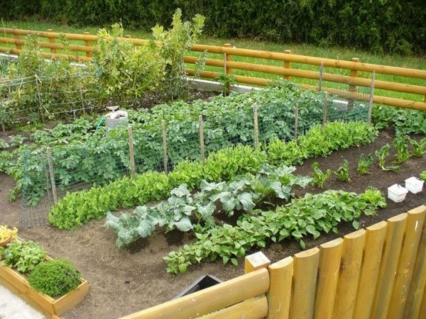 Terrace farming benefits of terrace farming for Terrace cultivation