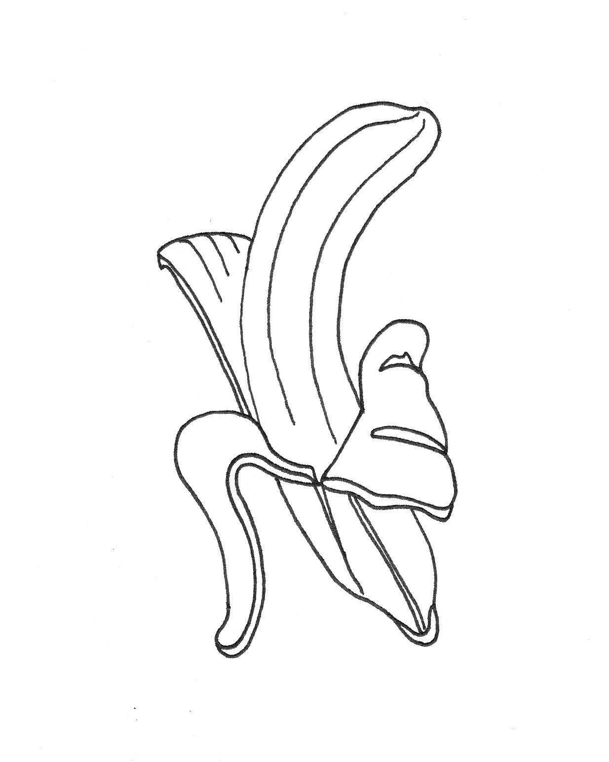 Line Art Fruits : Fruit line drawing