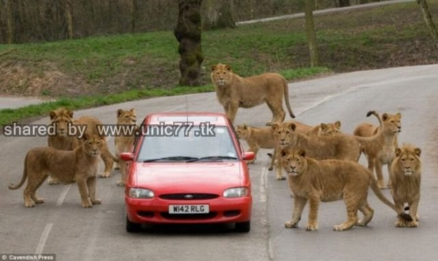 cars_and_animals_640_10.jpg (640×382)