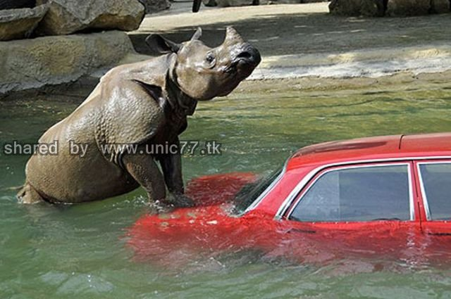cars_and_animals_640_01.jpg (640×425)