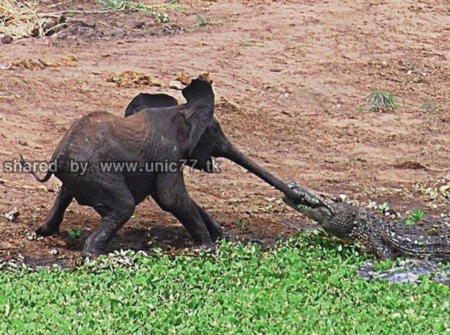 elephants_to_the_640_03.jpg (640×477)