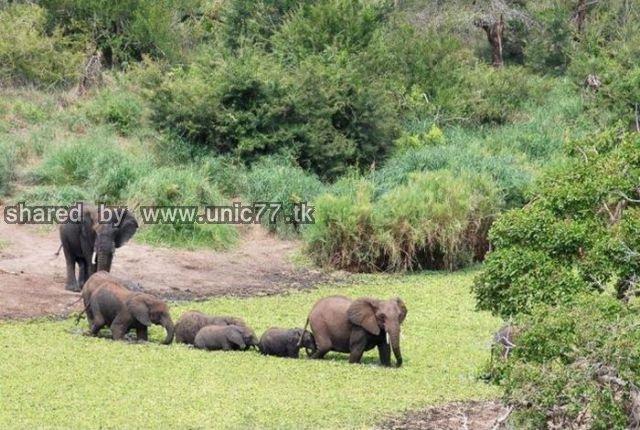 elephants_to_the_640_07.jpg (640×430)