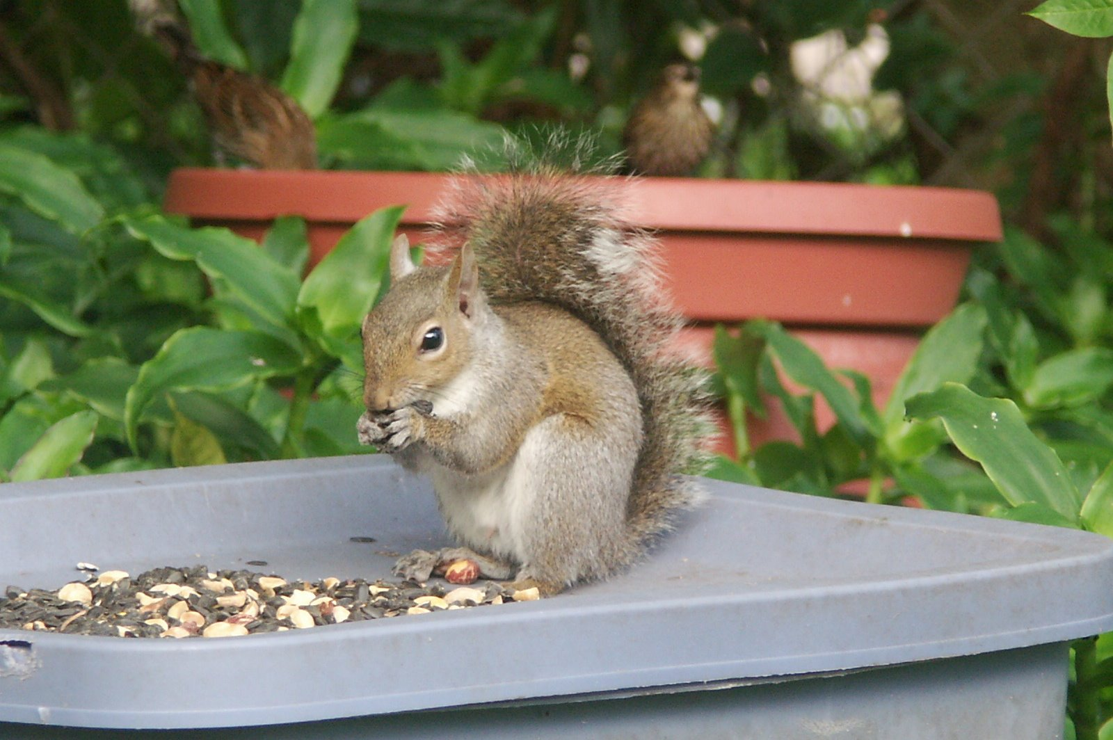 [squirrel_breakfast]