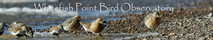 WPBO Waterbird Count Fall 2010