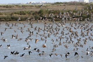 帕羅奧多灣地觀鳥