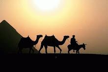 Los camellos del desierto