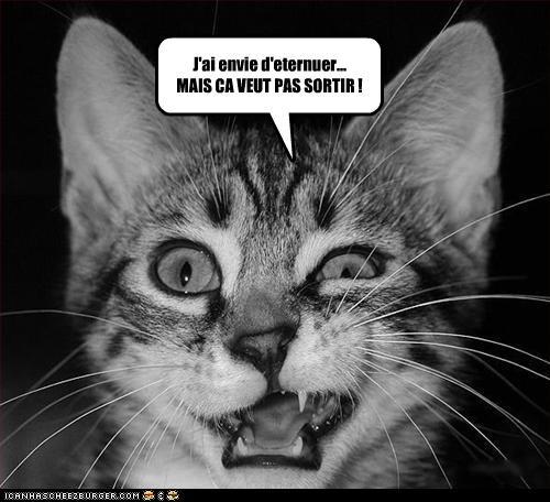 http://3.bp.blogspot.com/_mVVGgAekufk/S4atoEyiYsI/AAAAAAAACBQ/VdMKsxF_aFY/s640/cat.jpg