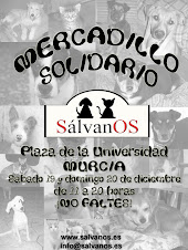 Mercadillo solidario por los perritos