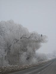 Soimul si iarna