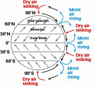 convection cell diagram juanribon  : hadley cell diagram - findchart.co