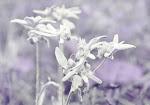 Чанагш юм бүхэн улирч одно Цагаан уул цэцэг хээрийн салхинд сэмэрч одно