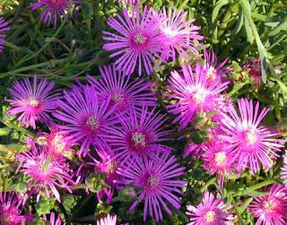 Una flor hermosa