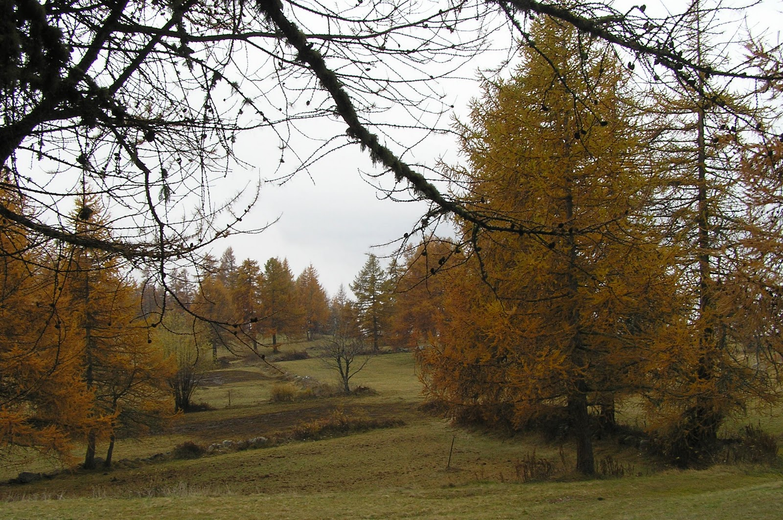 Malati di montagna autunno particolare sulla testa comagna - Riscaldare velocemente casa montagna ...