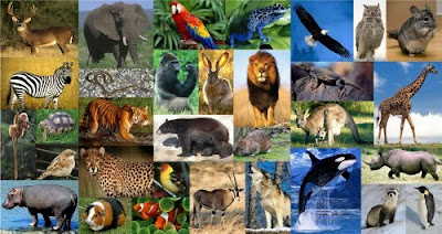 collage_many+animals.jpg