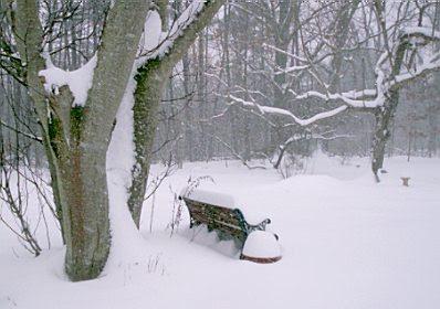Snow January 2010 #2