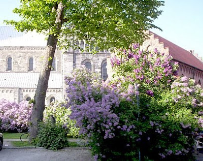 Lund University: Lilacs