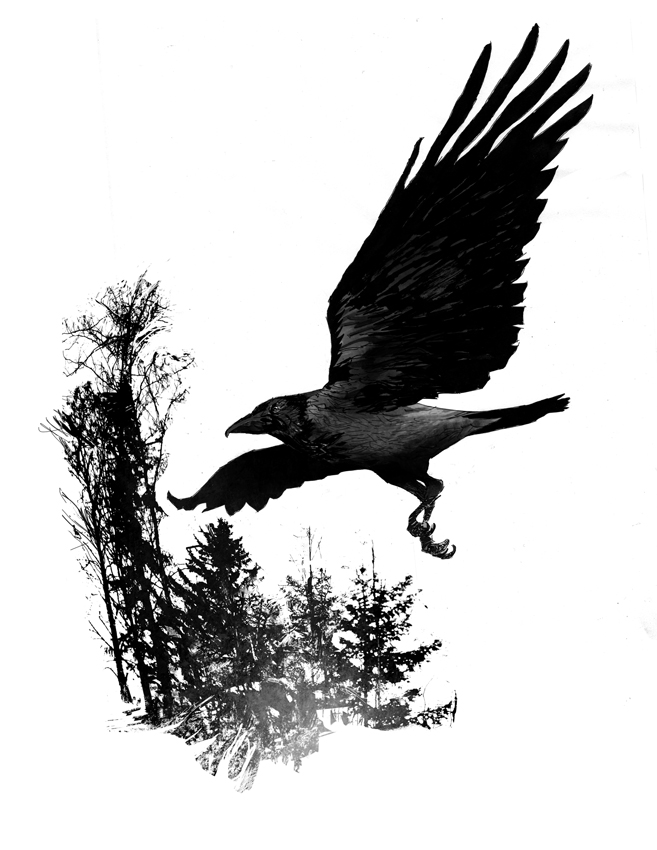 Displaying (19) Gallery Images For Crow Tattoo Drawing...