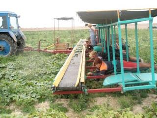 Механизация сельскохозяйственного производства. Прицеп к трактору с людьми, занимающихся уборкой урожая.