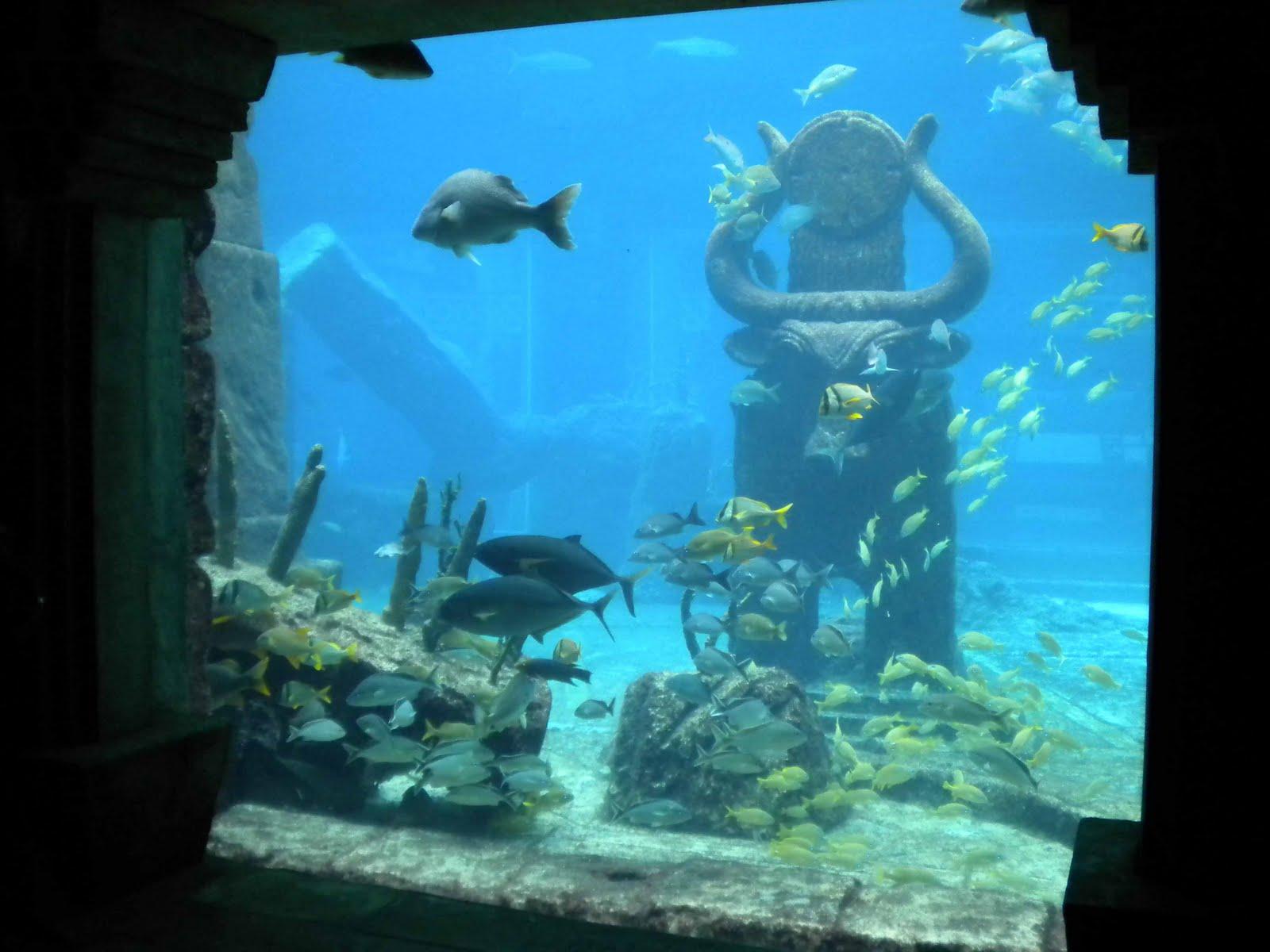 Adventuresome 50 By 50 The Atlantis Resort Paradise