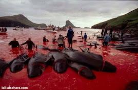 Massacre dos golfinhos na Dinamarca