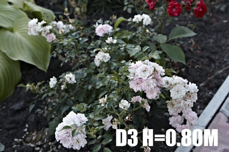D3 H=0
