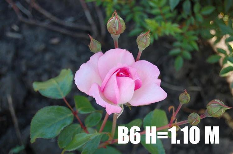 B6 H=1